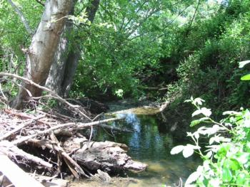 Creek in San Geronimo Watershed. Photo courtesy Liz Lewis, Marin County Department of Public Works
