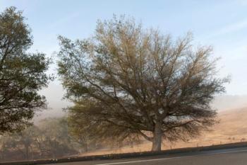 Tree IPM