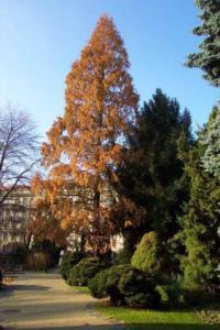 Tree Desease